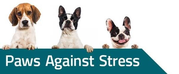 Image result for paws against stress